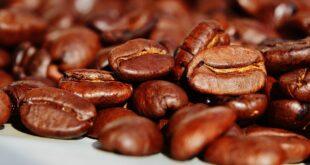 nuove varietà caffè