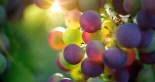 Wine Spectator, premiazione vino gallura