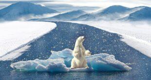 polar bear 2750604 1920