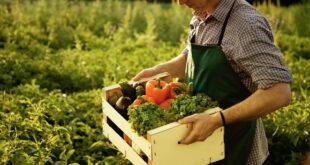 Agricoltura biologica Italia tra i protagonisti in Europa