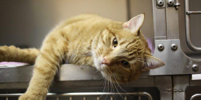 cat 4988407 1920 veterinario farmaco