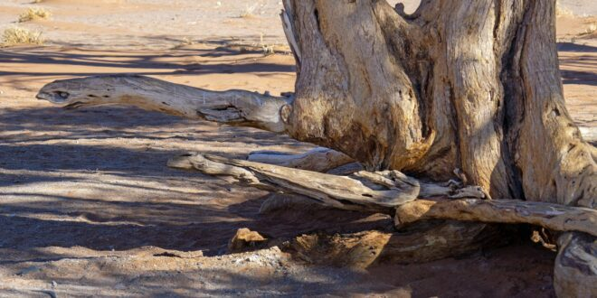desert 5641251 1920