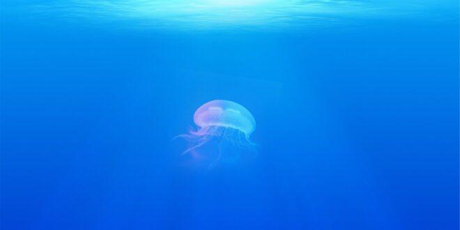 jellyfish 698521 1280