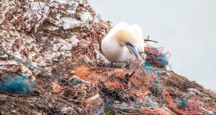 ambiente plastica inquinamento ecologia