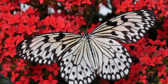 butterfly 1218884 1920