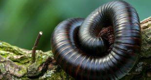 giant centipedes 208590 1920