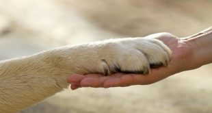 animali cane zampa pet therapy ftlia
