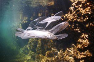 Plastica inquinamento mari